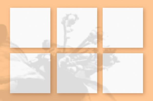 자연광은 주황색 질감의 배경에 놓인 6개의 정사각형 백서에 식물의 그림자를 드리웁니다. 모형
