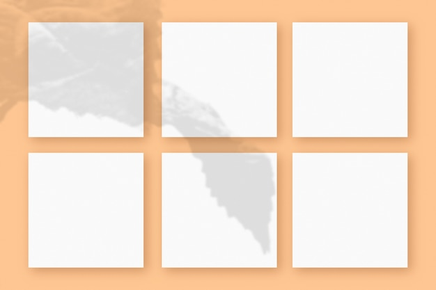 자연광은 주황색 질감의 배경에 놓인 6개의 정사각형 백서에 식물의 그림자를 드리웁니다. 모형.