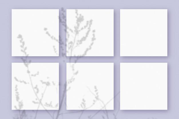 自然光は、紫色のテクスチャ背景に横たわっている白い紙の6つの正方形のシートに植物から影を落とします。モックアップ。