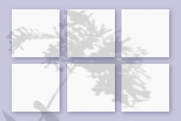 자연광은 보라색 질감 배경에 놓인 6개의 정사각형 백서에 식물의 그림자를 드리웁니다. 모형.