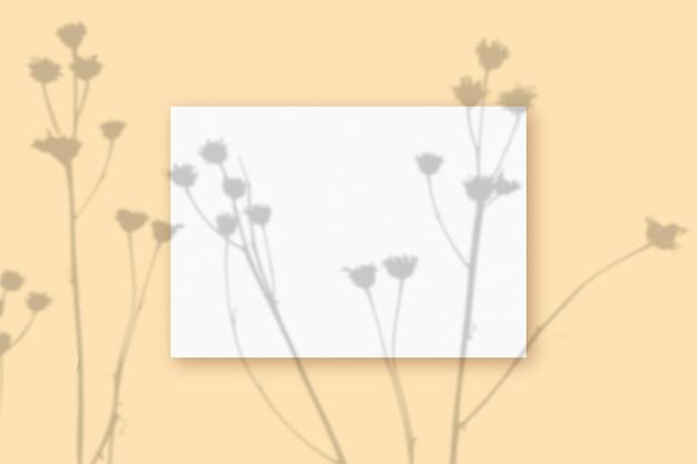 自然光は、ベージュのテクスチャ背景に横たわっている白いa4紙の長方形のシートに植物から影を落とします。モックアップ。