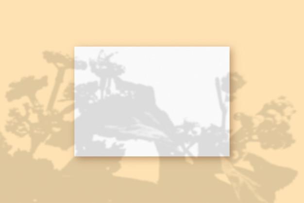 자연광은 베이지색 질감 배경에 놓인 흰색 a4 용지의 직사각형 시트에 식물의 그림자를 드리웁니다. 모형.