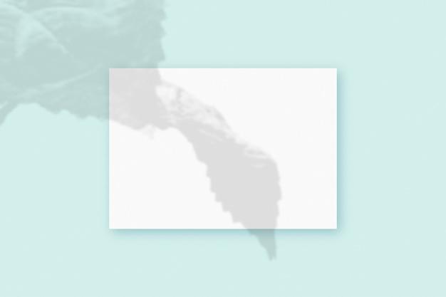 自然光は、青い織り目加工の背景の上にある白いa4紙の長方形のシートに植物から影を落とします。モックアップ。