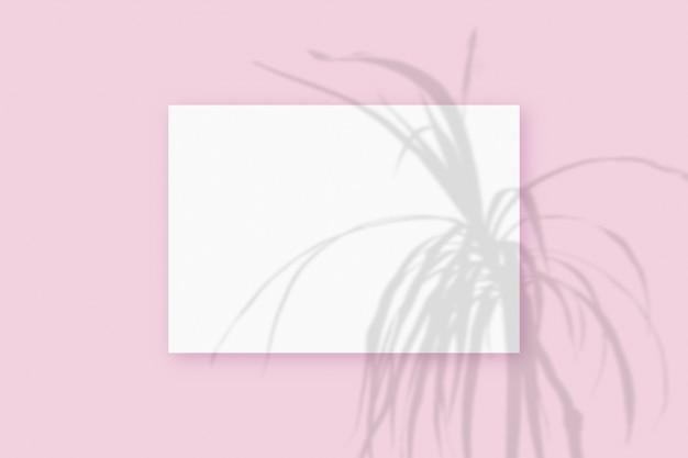 자연광은 분홍색 질감의 배경에 놓인 흰색 a4 용지의 직사각형 시트에 식물의 그림자를 드리웁니다. 모형.