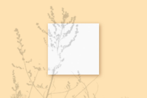 自然光は、ベージュのテクスチャ背景に横たわっている白い紙の正方形のシートに植物から影を落とします。モックアップ。