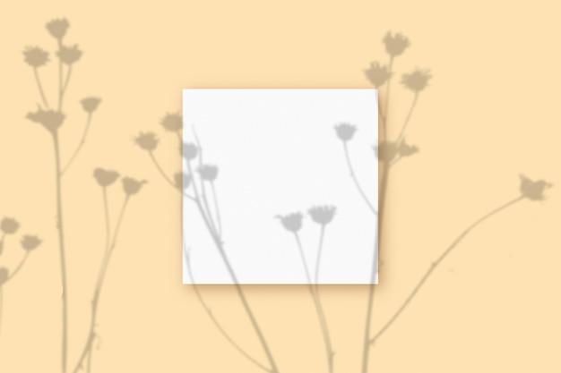 자연광은 베이지색 질감 배경에 놓인 정사각형의 흰색 종이에 식물의 그림자를 드리웁니다. 모형.