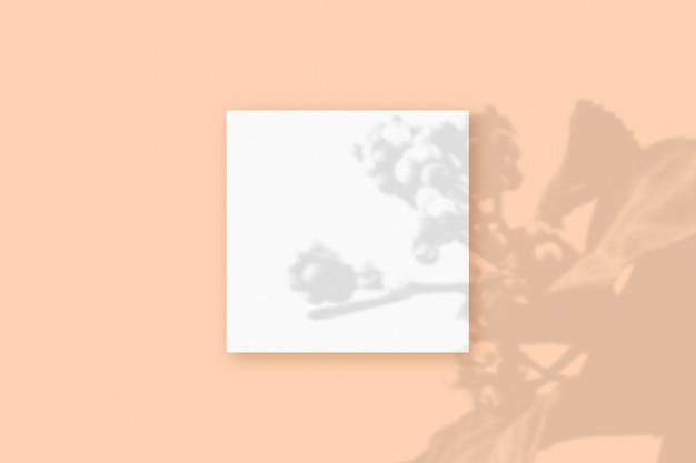 자연광은 베이지색 질감 배경에 놓인 정사각형의 흰색 종이에 식물의 그림자를 드리웁니다. 모형