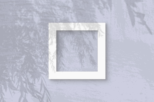 Natural light casts shadows from an willow branch on square frame of white textured paper