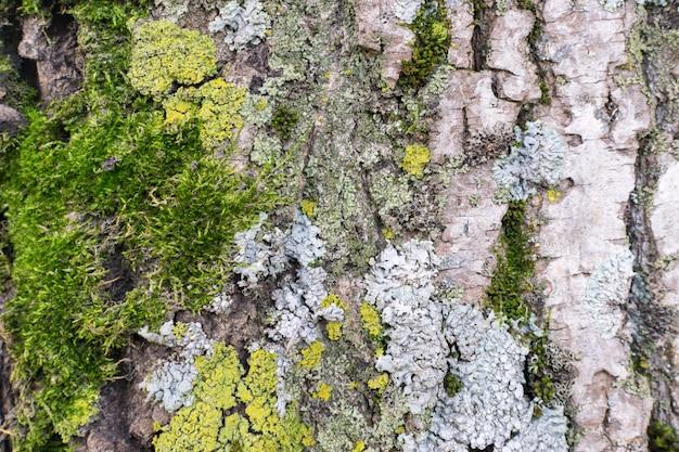 Natural old tree bark