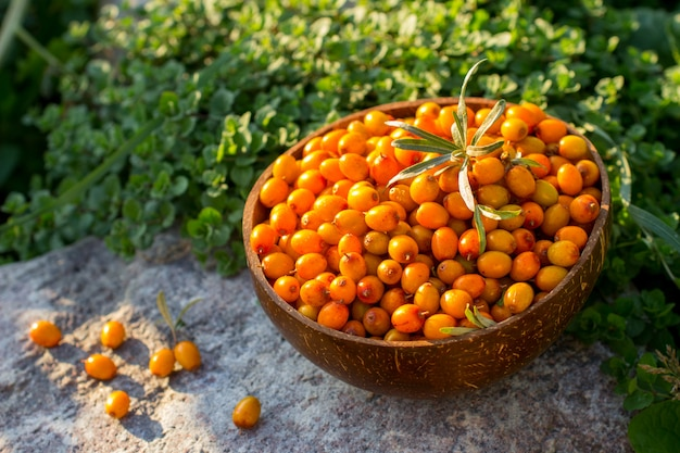 Natural organic ripe sea buckthorn berries in a wooden bowl on a stone in summer outdoors