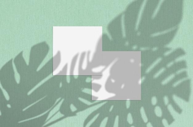 自然のオーバーレイ照明がモンステラが残す影