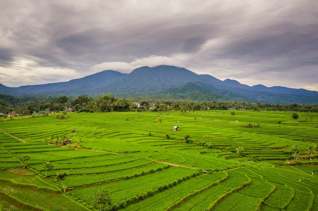 Natural panorama of expanse of green rice fields and mountain leaves in bengkulu utara, indonesia