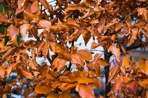 茶色の植物の自然なパターンの背景