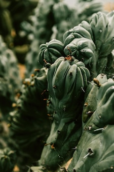 Natural pattern of a succulent plant