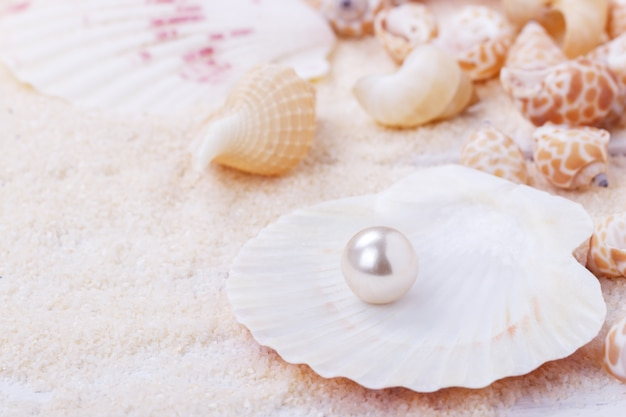 Natural pearl in a shell