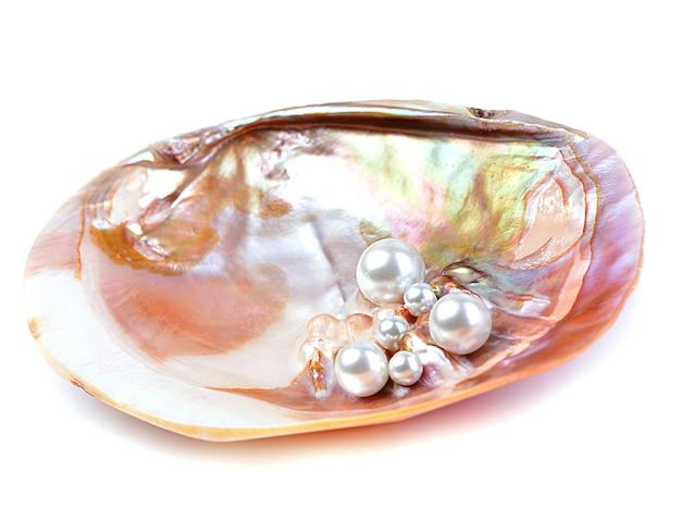 牡蠣の殻の中の天然真珠