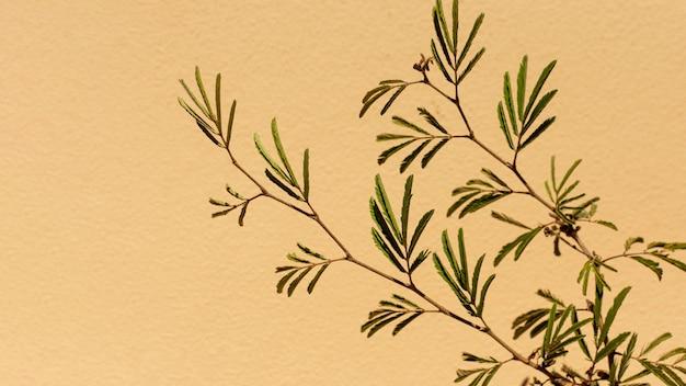 Natural plant arrangement on monochromatic background