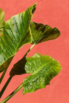 単色の背景に自然な植物の配置