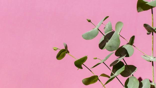 Assortimento di piante naturali su sfondo monocromatico