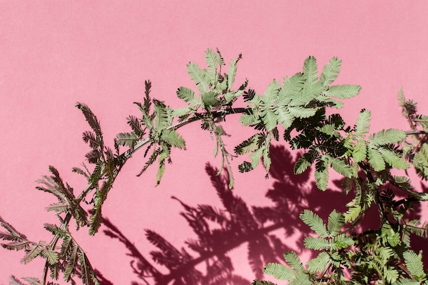 Natural plant assortment on monochromatic background