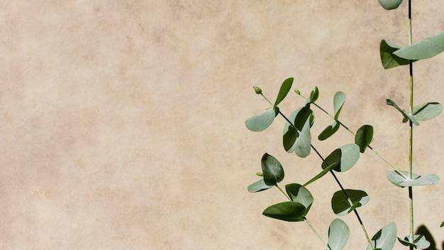 단색 배경에 천연 식물 구색