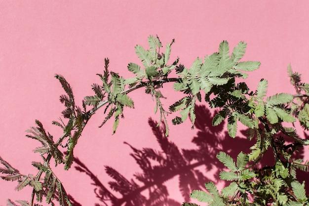 単色の背景に天然植物の品揃え