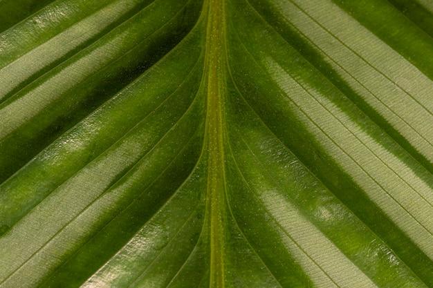 テクスチャーを持つ天然植物の葉の茎