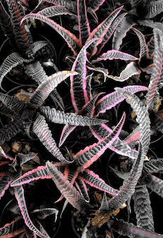 천연 식물 잎 단풍 추상 질감 크립탄서스 bromeliads 알로에 bromeliaceae aechmea