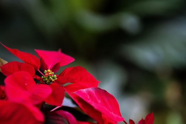 Natural red flower in the garden