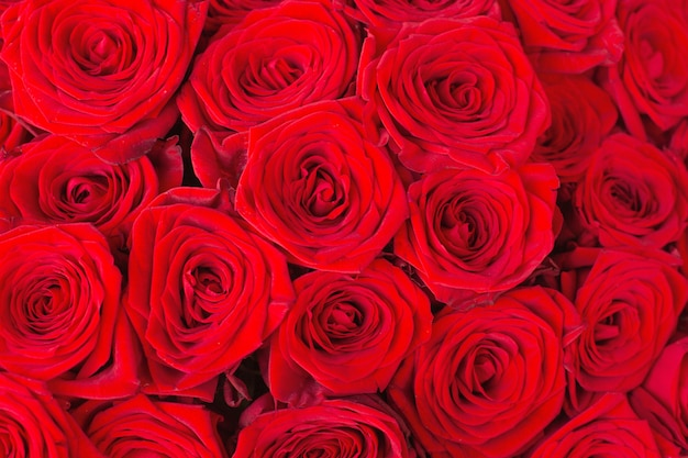 Natural red roses background close up texture