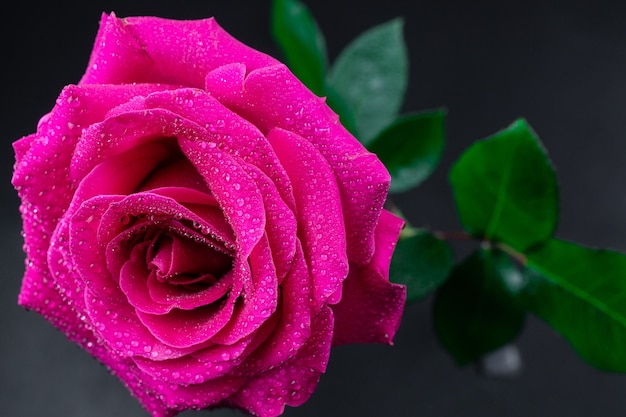 Natural red roses background.