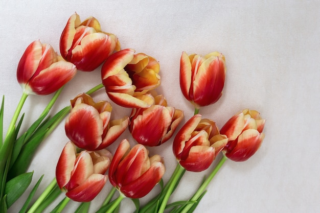 Natural red tulips