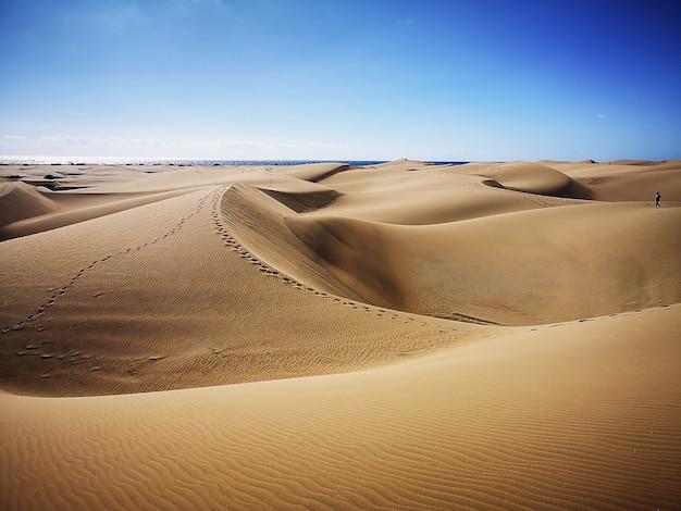 スペイン、グランカナリア島のマスパロマス砂丘の自然保護区