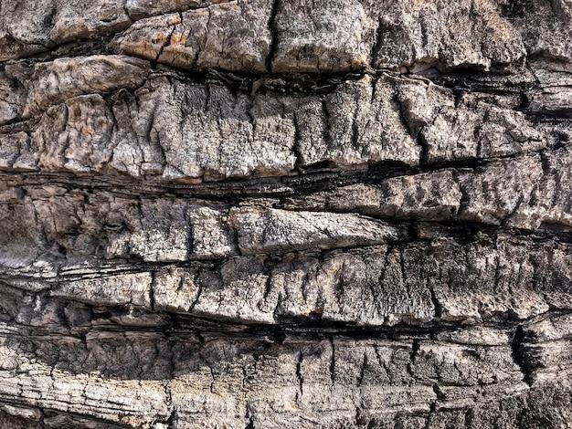 熱帯の木々の天然の粗い樹皮。