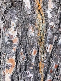 Натуральная грубая кора тропических деревьев.