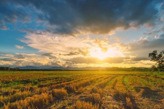Natural scene sky clouds and field agricultural sunset