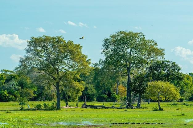 ポコネーマットグロッソブラジルの樹木畑と池のある湿地の自然の風景