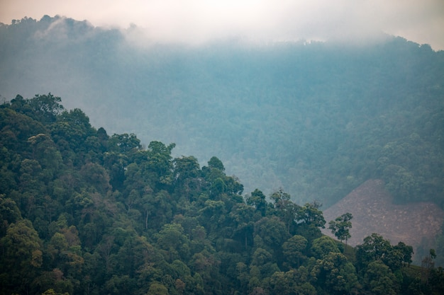 Natural scenery of tropical forest with mountains in southeast asia