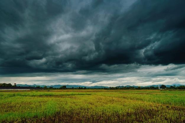自然の風光明媚な美しいフィールドと嵐雲と緑のフィールド農業