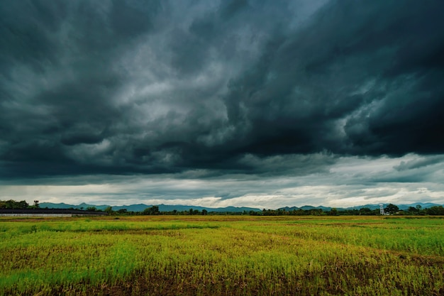 Natural scenic beautiful field and storm clouds and green field agricultural