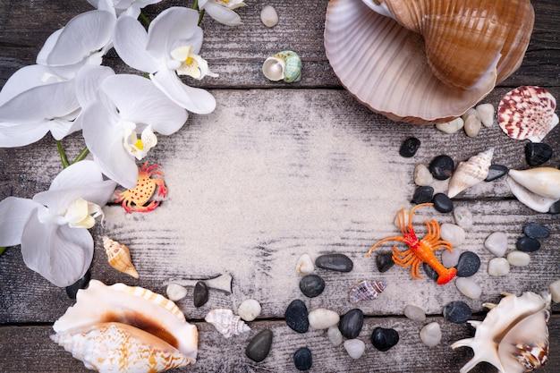 Natural sea shells