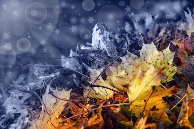 木の葉の自然な季節的衰退。冬を象徴する緑から黄色、濃い灰色へと色が変化します。星と光沢のある背景。