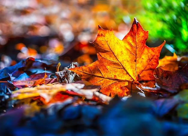 木の葉の自然な季節的衰退。冬を象徴する緑から黄色、濃い灰色へと色が変化します。