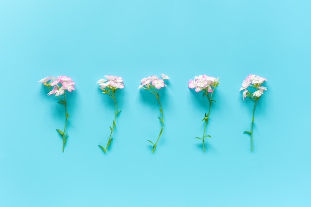 Natural small delicate flowers in a row with copy space. concept hello spring or summer, womens day