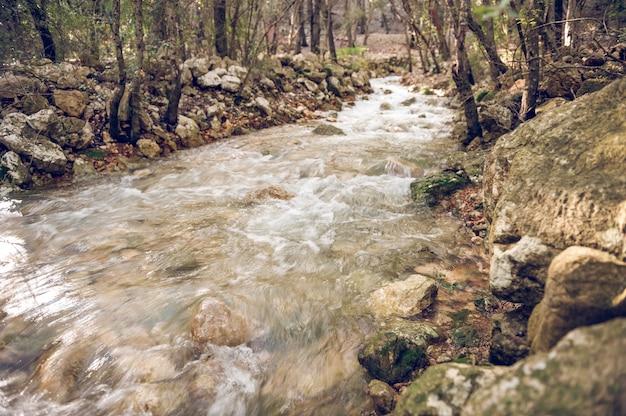 散発的に発芽する断続的な露頭を伴う自然の水源
