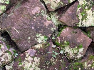 Natural stone wall, moist