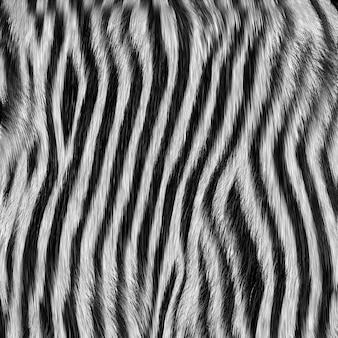 Натуральная полосатая кожа африканского дикого животного зебра