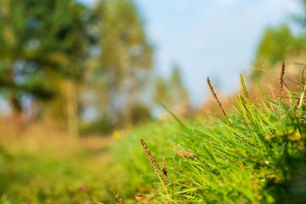 푸른 잔디 잎의 자연스럽고 흐릿한 배경은 화창한 아침에 신선한 잔디 초원을 닫습니다.