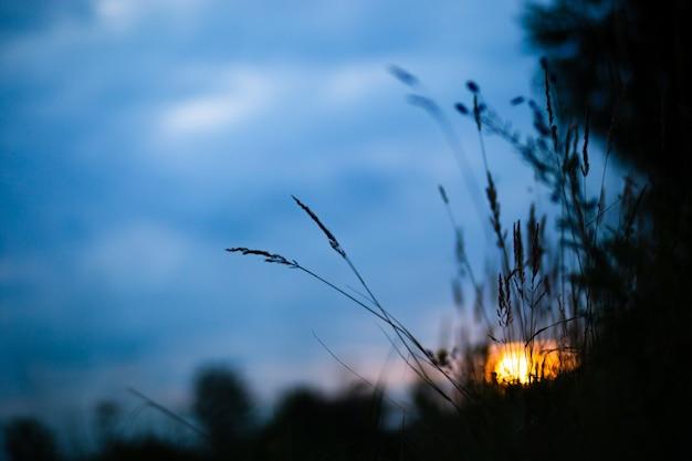 푸른 잔디 잎의 자연스럽고 흐릿한 배경은 일몰 저녁에 신선한 초원을 닫습니다.
