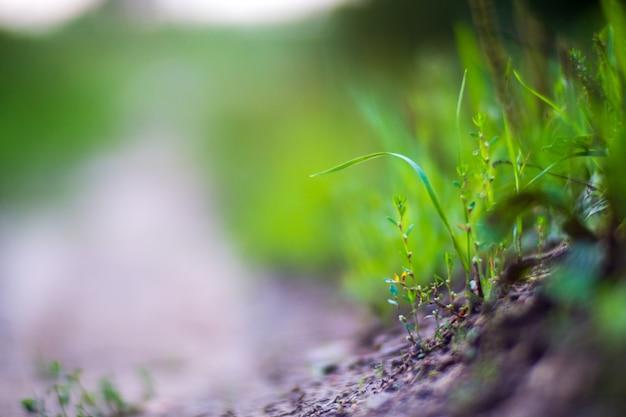 푸른 잔디 잎의 자연스럽고 흐릿한 배경은 화창한 아침에 신선한 초원을 닫습니다.